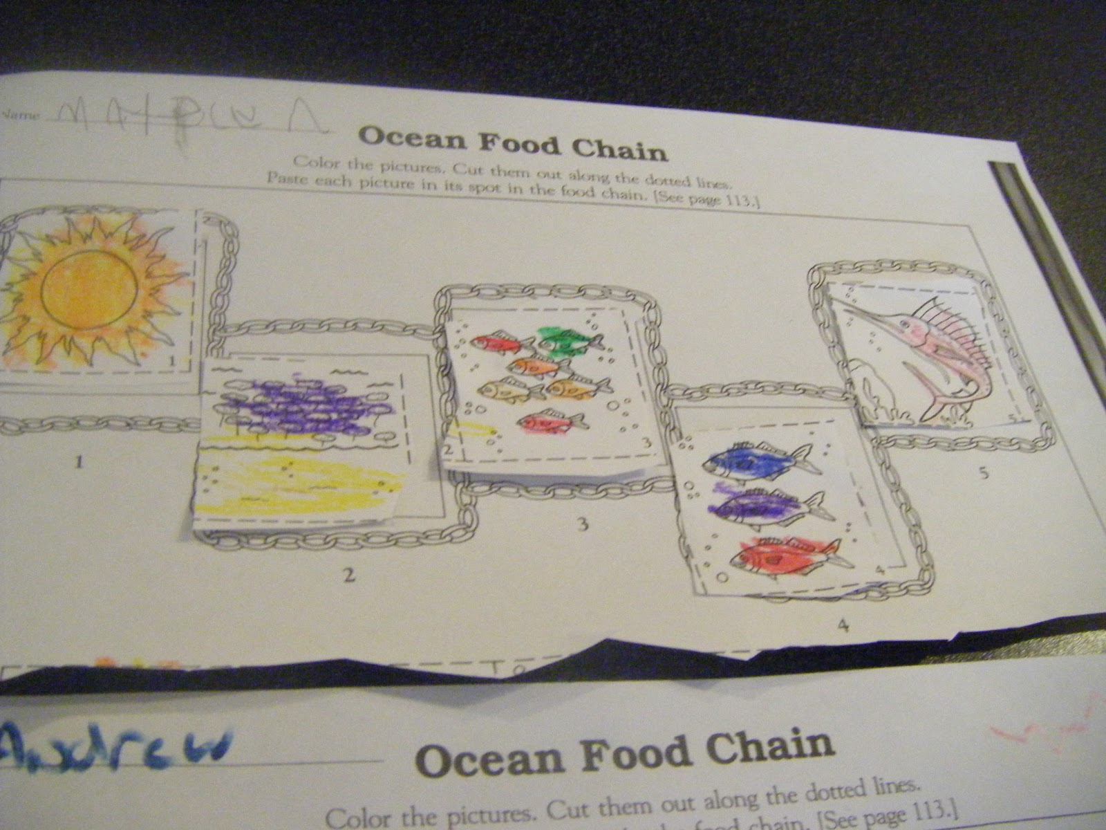 Abc S Of Jess S House Under The Sea Food Chain